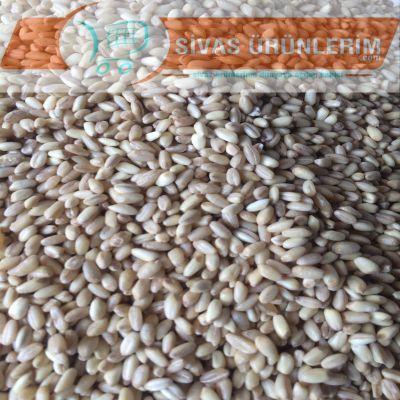 Sivas Yarma Buğday